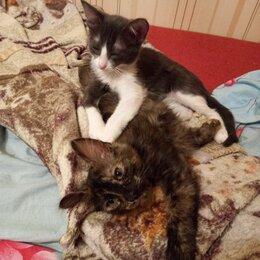 Кошки - Отдаю котят в добрые руки , 0