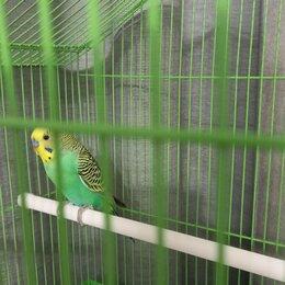 Птицы - Волнистый попугайчик в клетке, 0