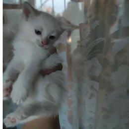 Кошки - Б - кошка Ч - кот.  Отдаю  безвозмездно. Заберите пожалуйста., 0