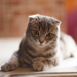 Животные - Пропал кот!, 0