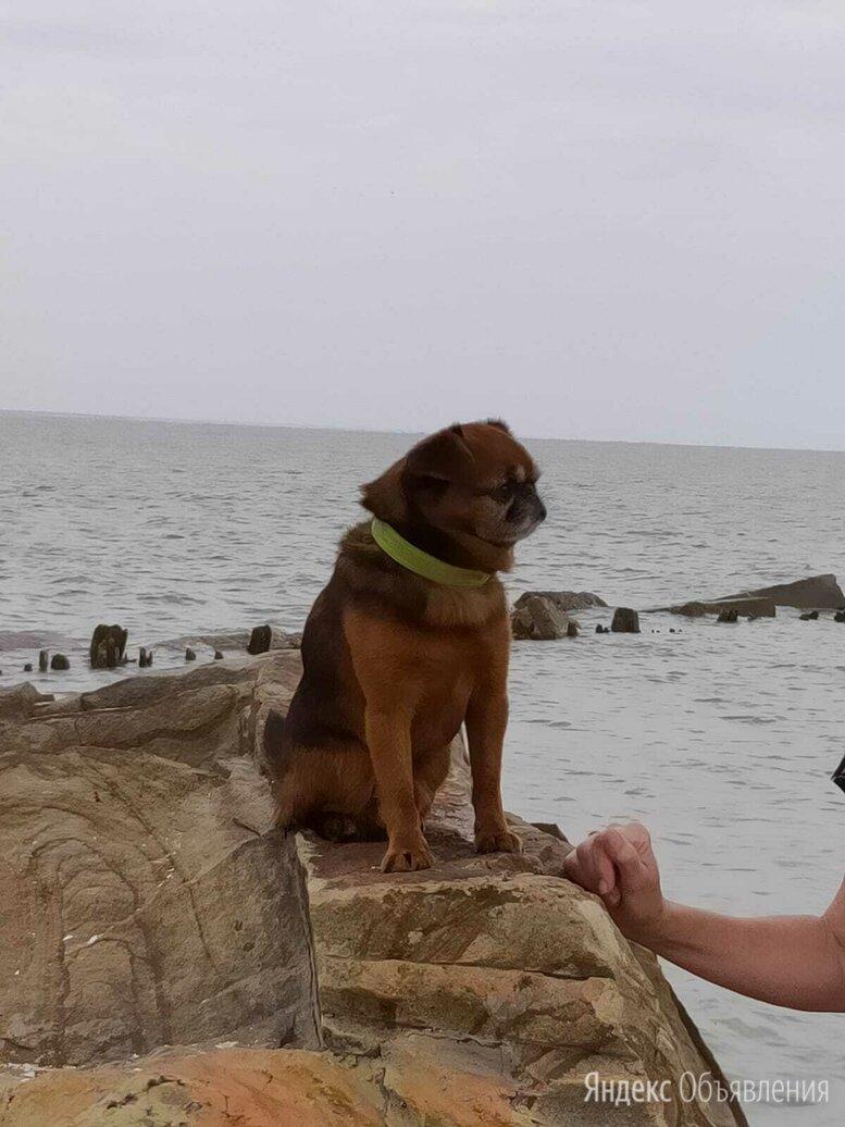 Пропала собака по цене 1₽ - Животные, фото 0