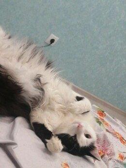 Кошки - отдадим кота в добрые руки , 0