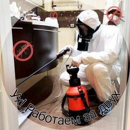 Бытовые услуги - Уничтожение насекомых. , 0