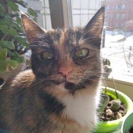 Кошки - Потеряшка, 0