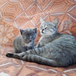 Кошки - котёнок , 0
