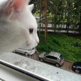 Животные - Найден белый кот, 0