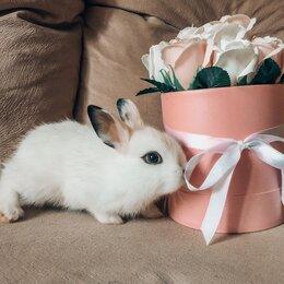 Кролики - карликовый кролик , 0
