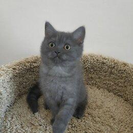 Кошки - Ждёт свою семью - готова к отправке на авиа и жд, 0
