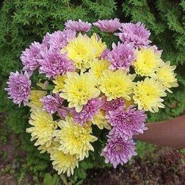 Цветы, букеты, композиции - Букет цветов, 0