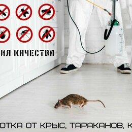 Бытовые услуги - Уничтожение клопов, тараканов, крыс, 0
