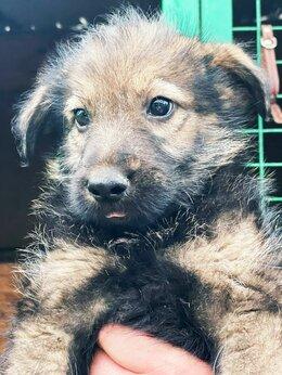Собаки - Щенок мега позитив ищет дом, 0