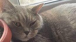 Кошки - Продам кота, 0