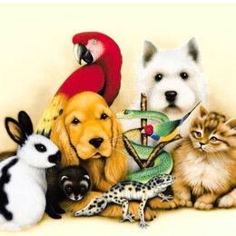 Услуги для животных - Передержка животных, 0