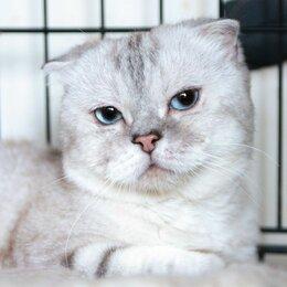 Кошки - Очень ласковый котик Пумпон, 0