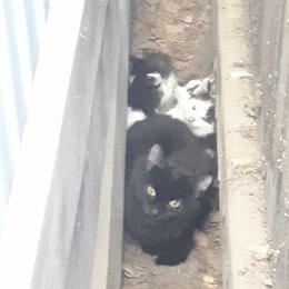 Кошки - Кошка с котятами, 0
