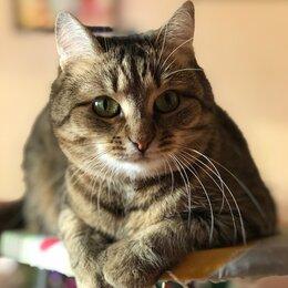 Животные - Звенигород. Убежала кошка 17.07.2021. , 0