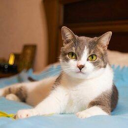 Кошки - Лавруша - Кот Мечта! В любящие руки., 0