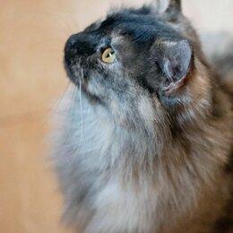 Кошки - Пепельная красавица Молли ждет свою семью, 0