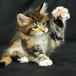 Туалеты и аксессуары  - Спрей Приучение к туалету для кошек, 0