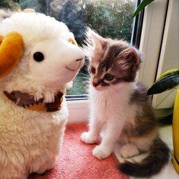 Кошки - Котята срочно ищет дом, 0