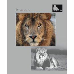 """Бумажная продукция - Тетрадь """"Hatber"""" А5 96 л Wild Cats, клетка, на скобе, обложка- хром..., 0"""