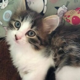 Кошки - Любимые животные котята!!, 0
