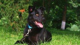 Собаки - Статный красавец ждёт семью , 0