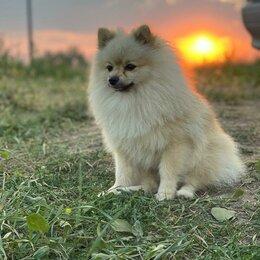 Услуги для животных - Дрессировка и передержка собак в Коктебеле Крым, 0