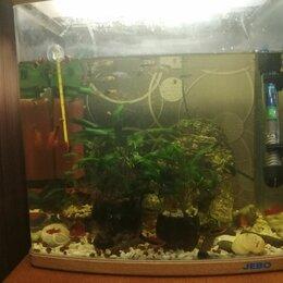 Аквариумные рыбки - Продам рыбки мечяносцы, 0