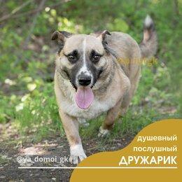 Собаки - Дружарик, 0