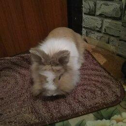Кролики - Декоративный кролик, 0