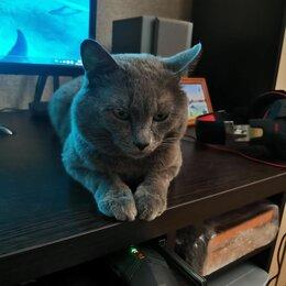 Кошки - Коты, 0