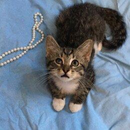 Кошки - Супер ласковый ручной малыш Сенька 4 мес усыновляется, 0
