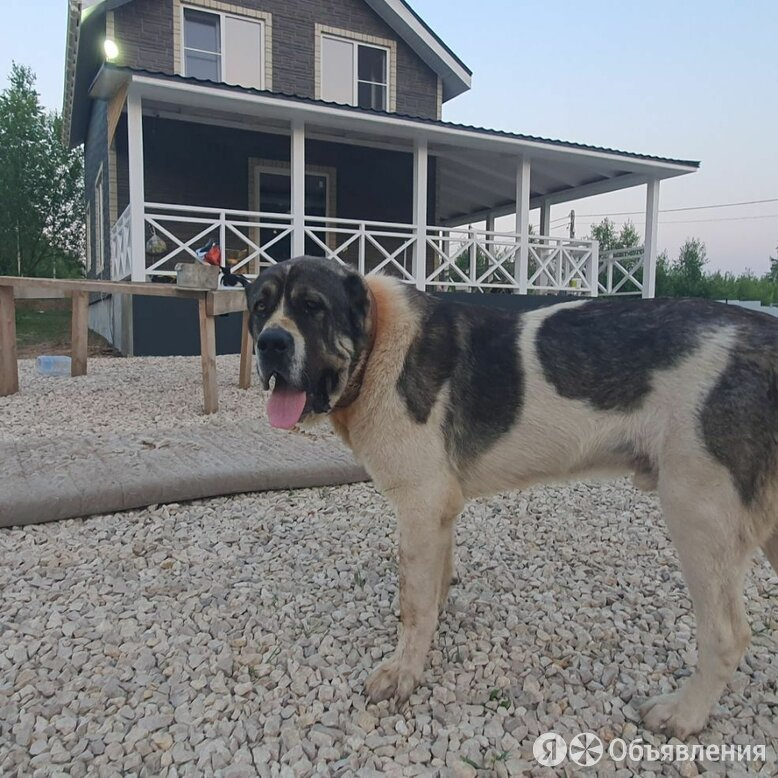 Пропала собака  по цене не указана - Животные, фото 0
