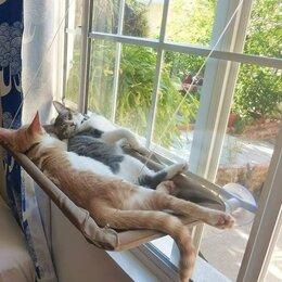 Лежаки, домики, спальные места - Лежанка гамак для котиков. Новая, 0