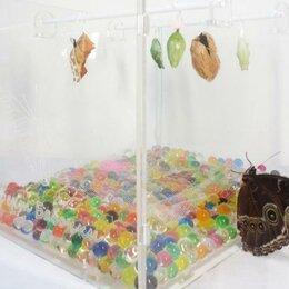 Развивающие игрушки - Детская мини ферма бабочек Morpho Pelledis, 0