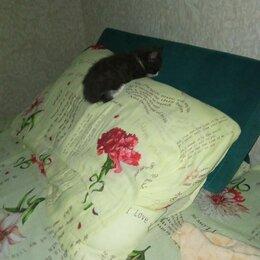 Кошки - Котëнок, 0
