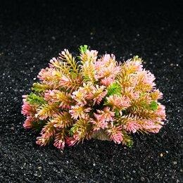 Растения для аквариумов и террариумов - Растение искусственное аквариумное, 10 х 17 см (комплект из 2 шт.), 0