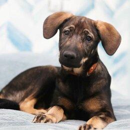 Собаки -  НЕвозможно НЕ влюбиться, милейший карапуз,  покорит сердце каждого, 0