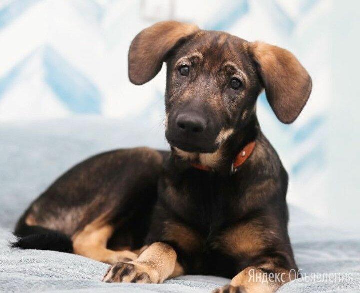 НЕвозможно НЕ влюбиться, милейший карапуз,  покорит сердце каждого по цене даром - Собаки, фото 0