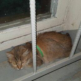 Животные - Найдена кошка, 0