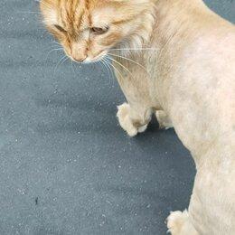 Животные - Отрадное. Рыжий кот в ошейнике, 0