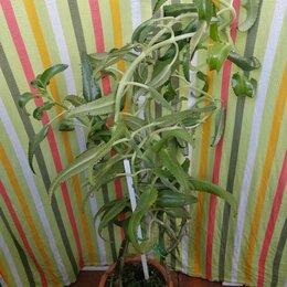 Комнатные растения - Каланхоэ, 0
