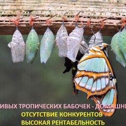 Сфера услуг - Высоко рентабельный бизнес ферма Живых Бабочек, 0