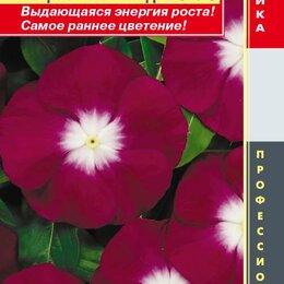 Приборы и аксессуары - Катарантус розовый (Барвинок) Пацифик Бургунди Хэйло ПЛ, 0