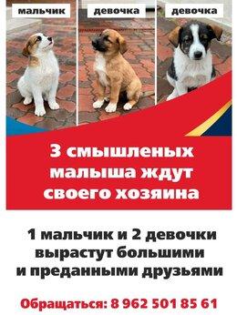 Собаки - Отдам, 0