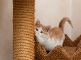 Кошки - Отдаю котенка, 0