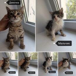 Кошки - Очаровательные малыши ищут самых лучших хозяев! , 0