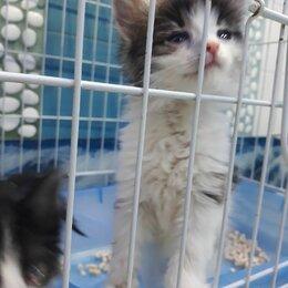 Кошки - Котенок мальчик полупушистый ласковый, 0