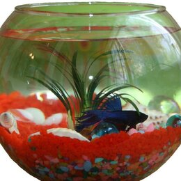 Аквариумные рыбки - Набор аквариум с рыбкой + флорариум с суккулентами, 0